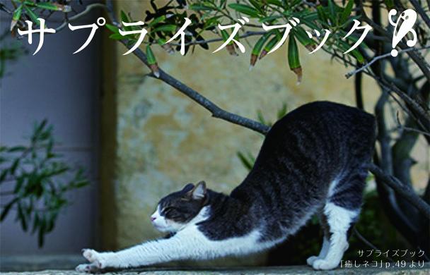 【サプライズBOOK】ネコを眺めてほわほわ~